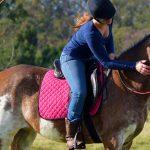 SOLD: Dakota – Stunning x-breed mare