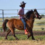 KANDAS – Ride-able Miniature Gelding for sale