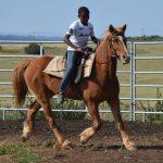 FOR SALE: Safe, sweet & placid x-breed pony gelding for sale!