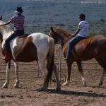 For sale: PATCHES – Very Tame and Sweet Pony Mare
